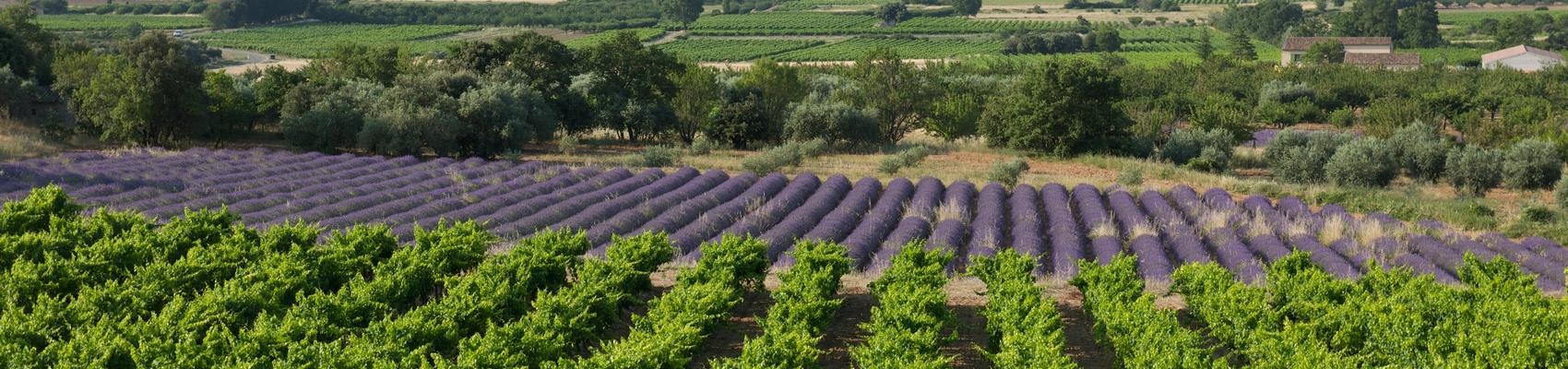 Rhône Valley Vineyards