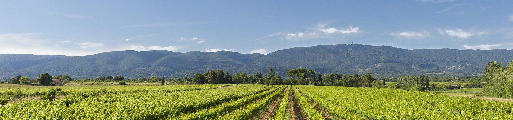 Luberon Vineyards