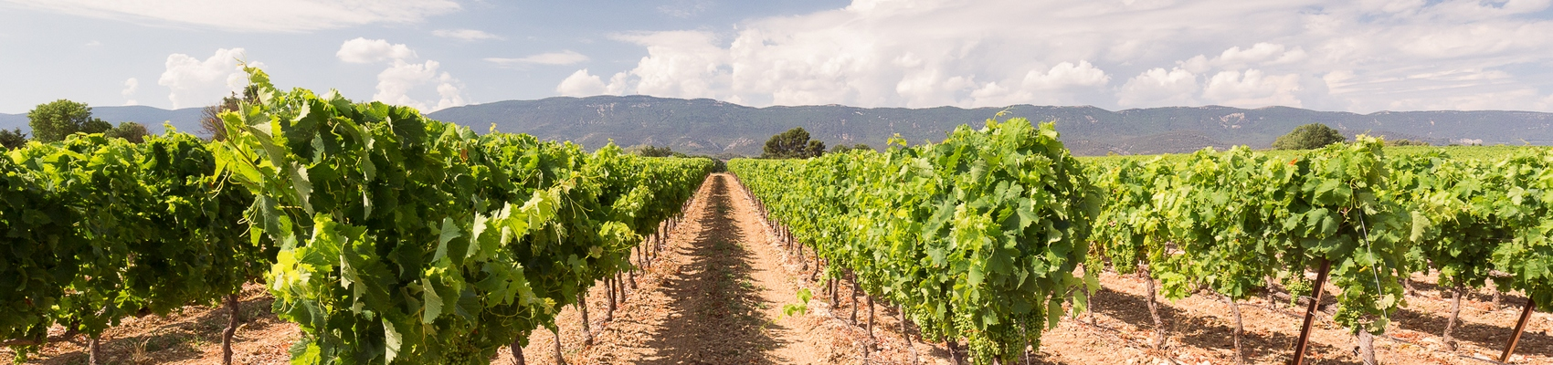 Ventoux Vineyards